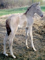 Topaz Merry Go's Filly: Topaz's Champagne Elevation